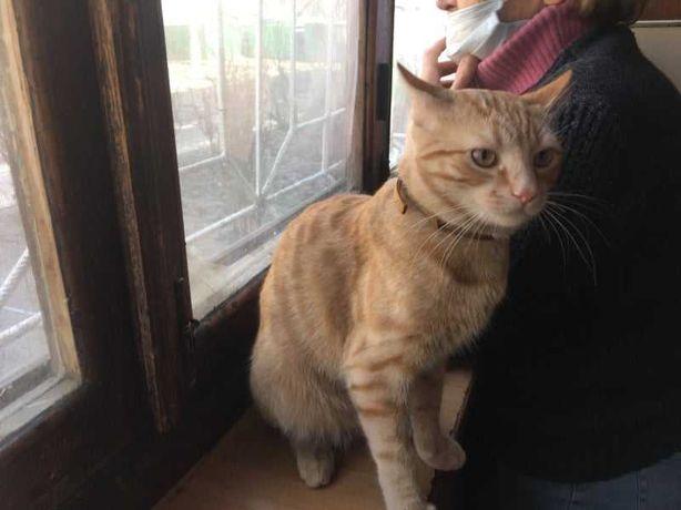 Кузя рыжий котенок 7 месяцев