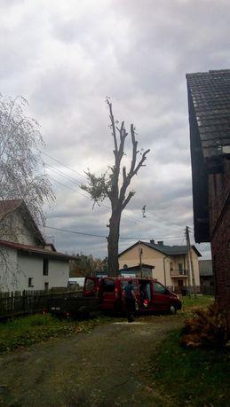 Wycinka drzew,zrąbkowanie gałęzi