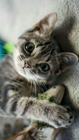 Котята девочки 3 мес