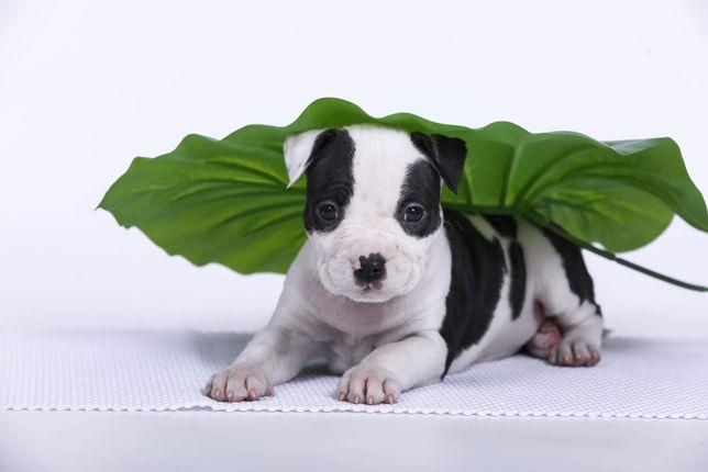 Не бойтесь позвонить, в разговоре Вы поймете Ваш ли это щенок!