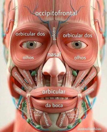 Мануально-буккальное моделирование (массаж) лица, шеи и декольте