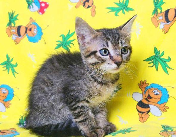 ласковый котёнок Май, кошка, 4 месяца