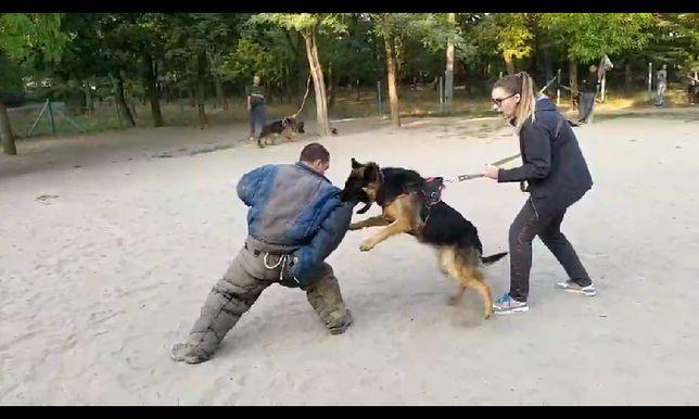 Кинолог Дрессировка собак в Одессе