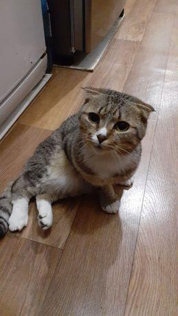 Пропал котик, если видели, сообщите пожалуйста!