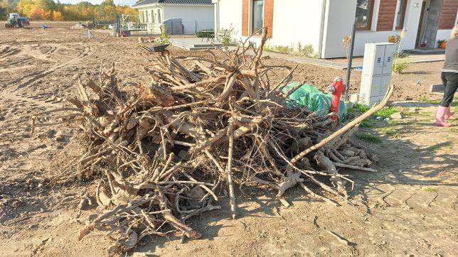 Drewno na opal korzenie karpy loft rękodzieło oddam gałezie