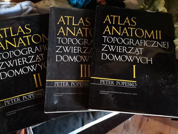 Atlas anatomii popesko 3 tomy