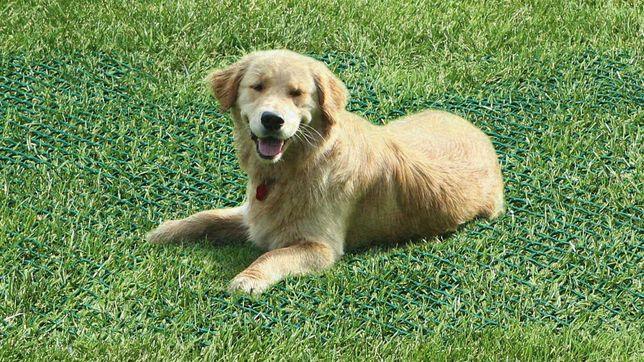 Rede para relva (Evite buracos do seu cão no jardim)