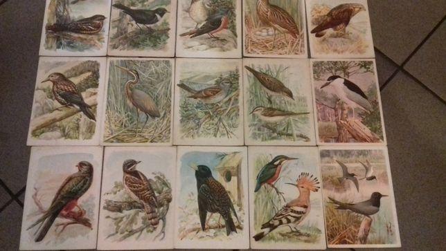 Pocztówki Ptaki prawnie chronione