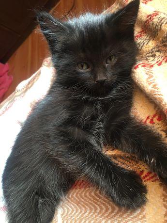 Отдам черного котенка в хорошие руки