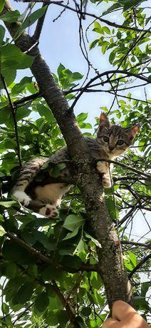 Отдам БЕСПЛАТНО котят в хорошие руки!!!