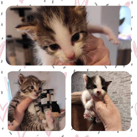 Kocięta kociaki kotki szukają domów