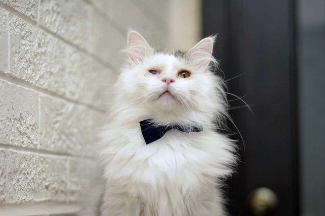 отдам кота, очень нежный, оссобенный, кастрирован. привит