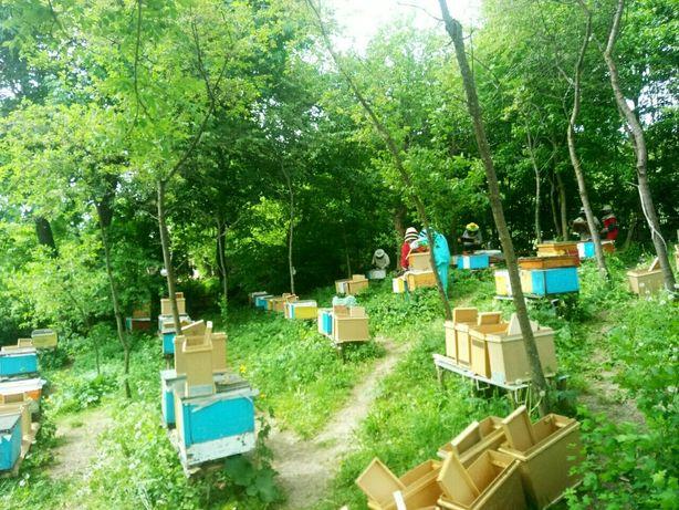 Реальная цена! Пчелопакеты 2021