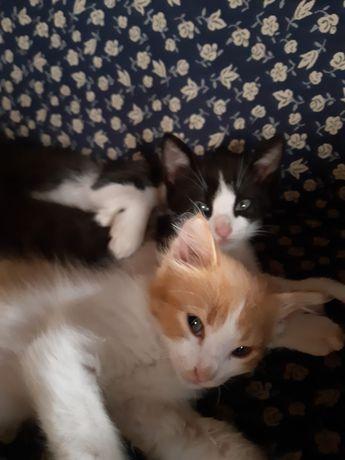 Dou gatinhos na zona de amarante