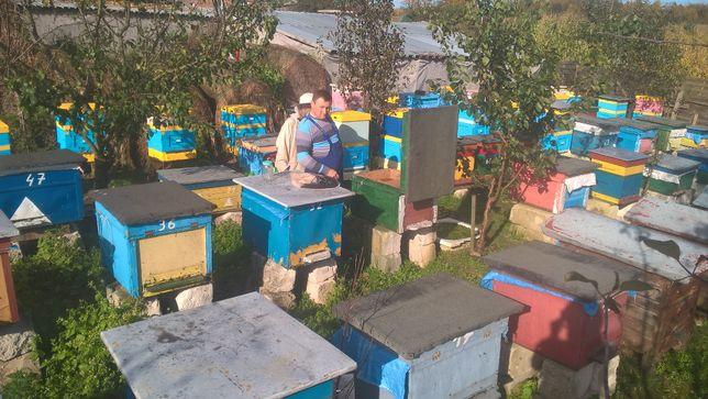 Odkłady pszczele 5 ramkowe na 2021 rok