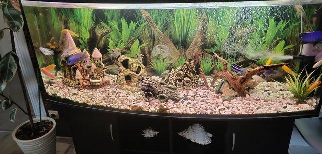 Овальный действующий аквариум 450л.