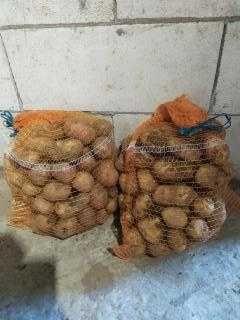 ziemniaki odmiana Tajfun, bella rosa