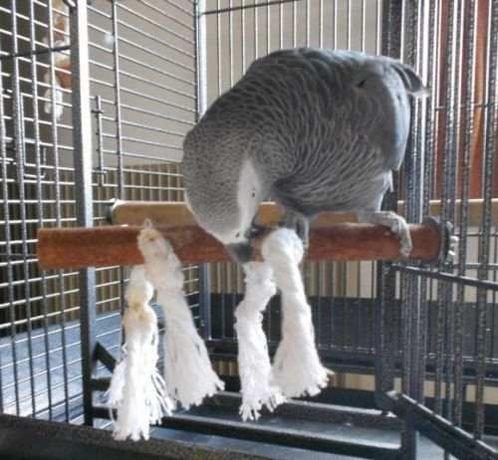 Poleiro NOVO em Madeira com Cordas para Aves TRIXIE