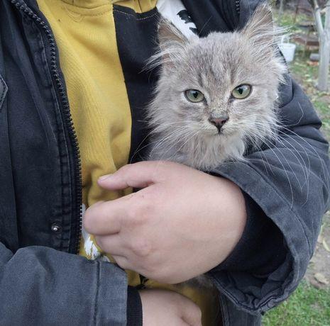 Отдам котенка мальчика