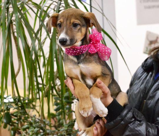 Дружелюбное и милое создание, красавица девочка Мейси, щенок