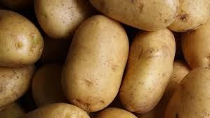 Ziemniaki sadzeniaki kwalifikowane HINGA kl.A Odm. skrobiowa