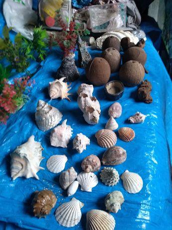 Ozdoby,muszle,kokosy,korzenie,,rośliny ,zamek...akcesoria...Wysyłka.