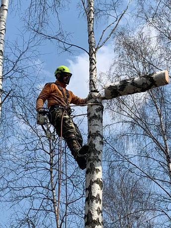 Wycinka/pielęgnacja drzew trudnych metodą alpinistyczną