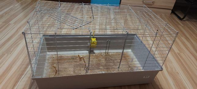 Klatka dla świnki morskiej wraz z wyposażeniem oraz gratisy, 77 x 44