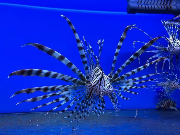 Обслуживание морского аквариума