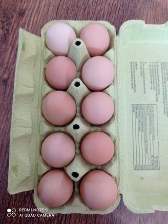 Jaja wiejskie ekologiczne