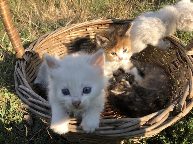 Срочно котятам нужен дом