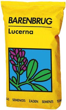Lucerna Bardine Barenbrug Yellow Jacket