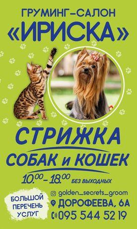 Груминг-салон Ириска, стрижка собак и кошек
