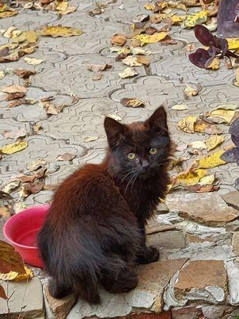 Котята ищут семью