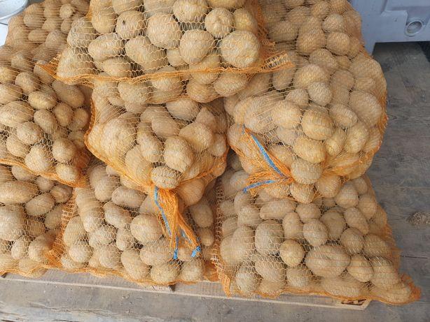 Ziemniaki VINETA -- (bellarosa/agria/lord)