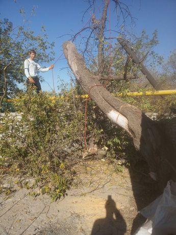 Спил сложных деревьев Обрезка веток Валка под корень