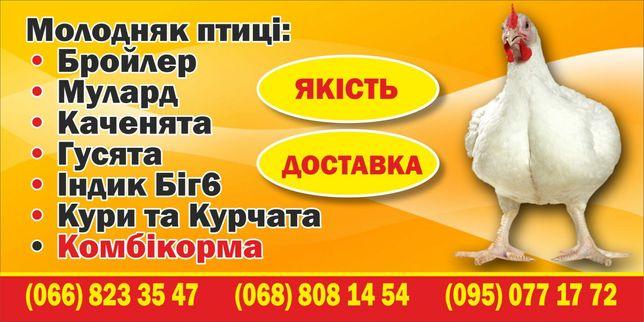 Бройлеры подрощенные и суточные, курочки несушки, Доминант, цыплята