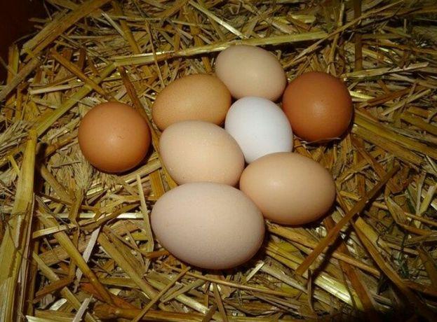 Jaja wiejskie wolny wybieg jajka
