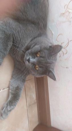 Котик для в'язки