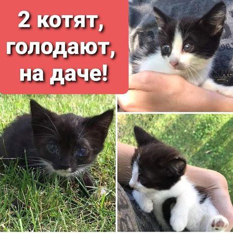 2 котенка голодают .
