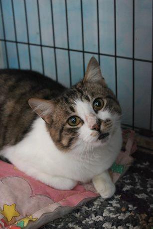 Котики и кошка (стерилизованные)