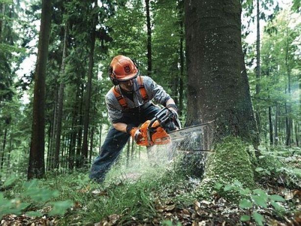 Wycinka Drzew & Pielęgnacja Zieleni