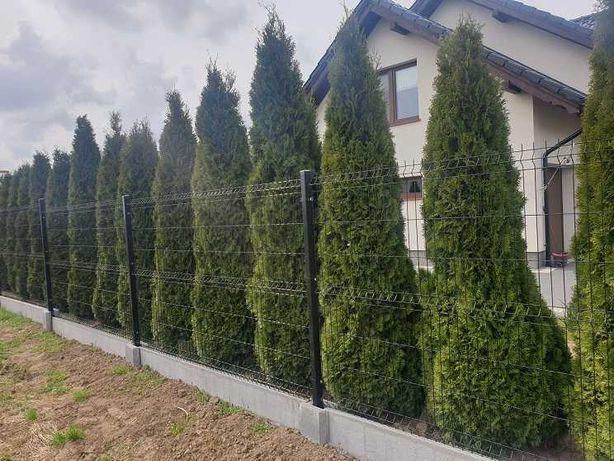 Ogrodzenia panelowe Panele ogrodzeniowe Panel 123 ø4