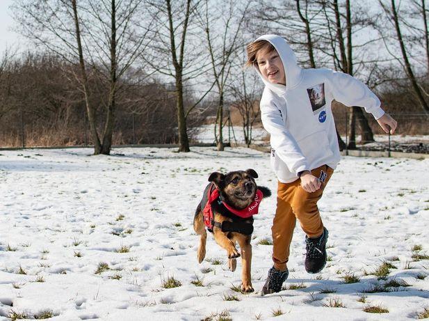 ZIBI- fajny, dojrzały pies do POKOCHANIA od zaraz