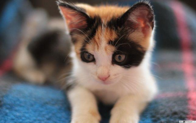 Кошенята Котики Коти в добрі руки