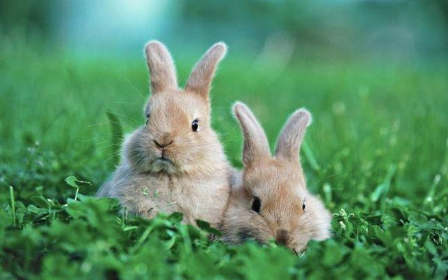 Комбікорм корм для кролів