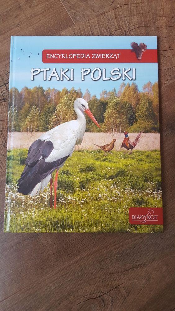 Ptaki Polski - encyklopedia zwierząt Przylep - image 1