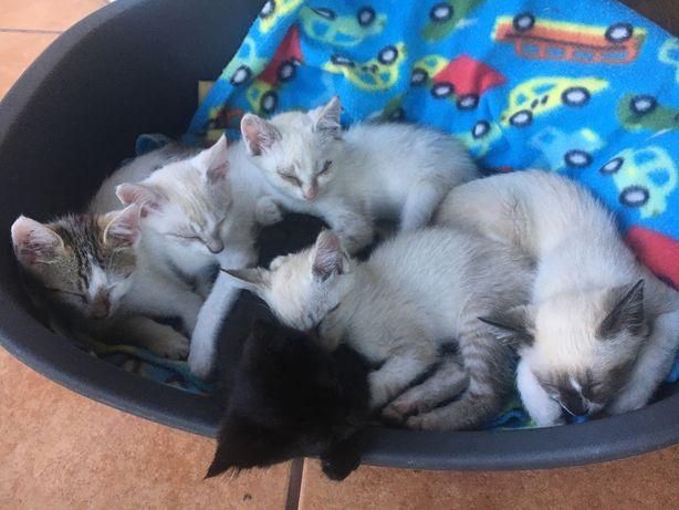 Dou gatinhos bebes
