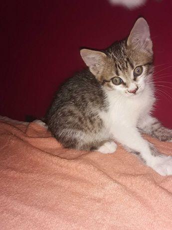 Милашечка котенок