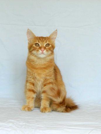 Котята. Отдам кошку подростка, стерилизована, вакцинирована
